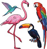 Colorful exotic tropical birds - flamingo, macaw, hummingbird and toucan