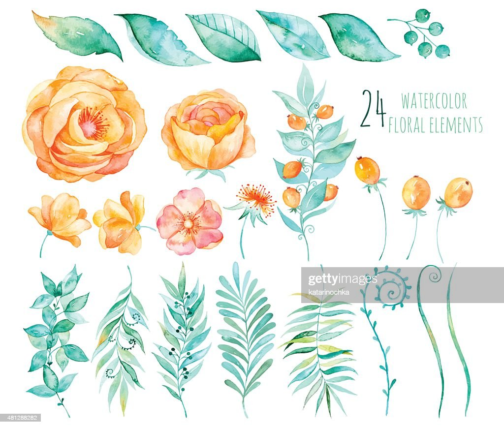 Colorful floral collection with roses, leaves, berries, branches and others