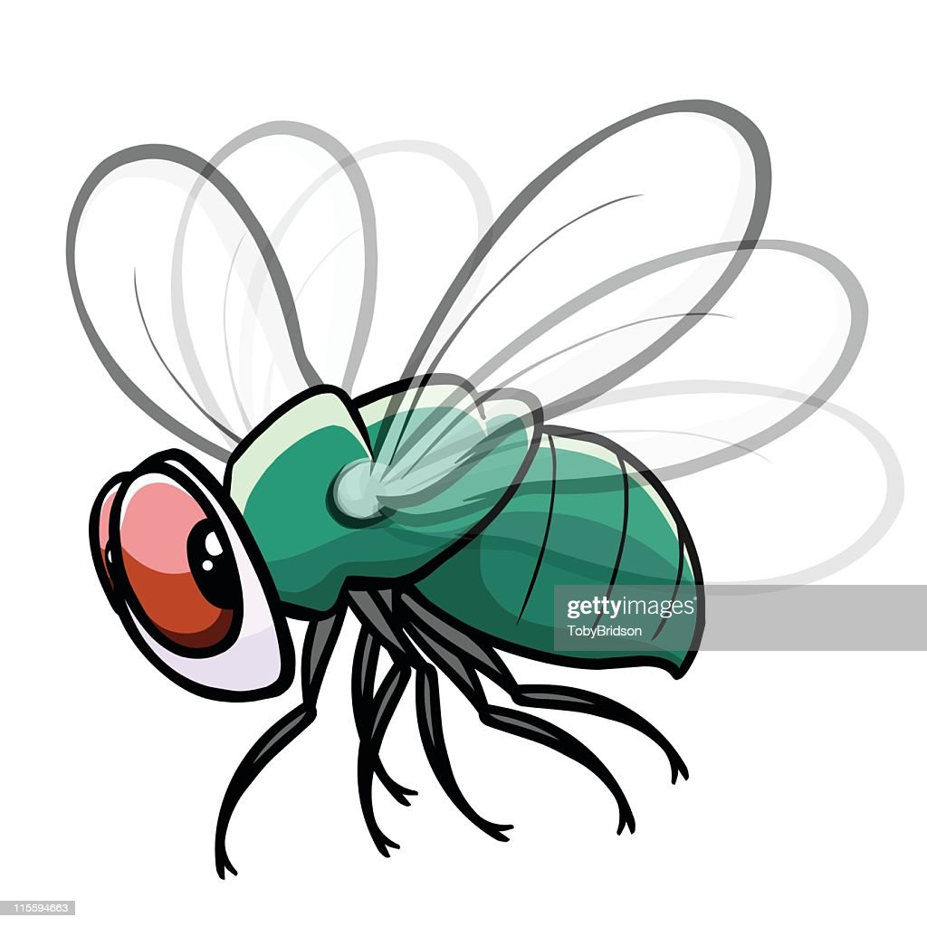 Colorful fly drawing with white background