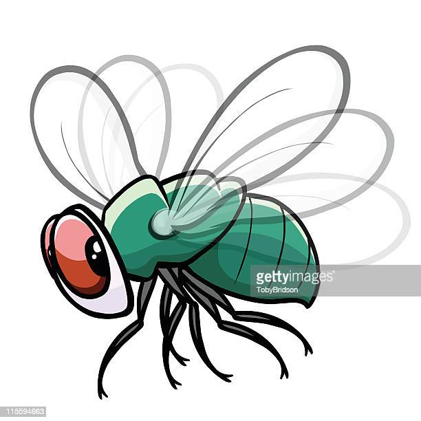 colorful fly drawing with white background - fly insect stock illustrations