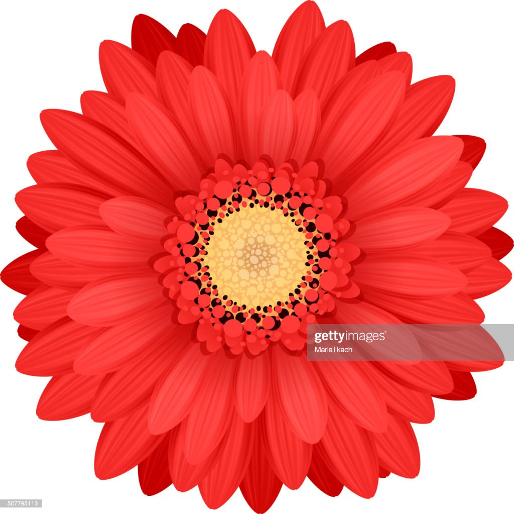 Colorful gerbera flower head - red and yellow colors.
