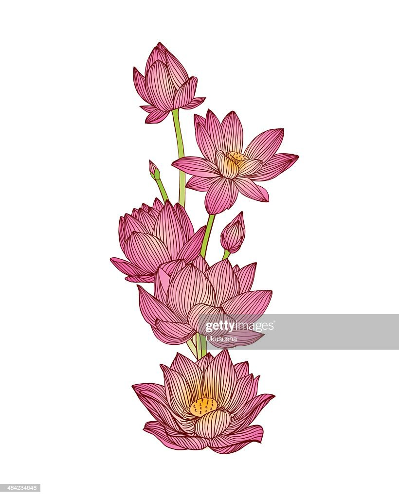 Colorful Lotus Flower Bouquet Vector Art Getty Images