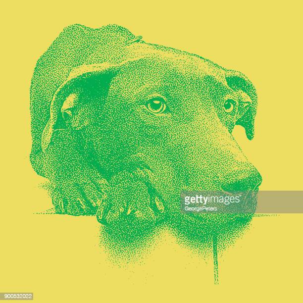 Colorful Mezzotint of a sleepy Chocolate Labrador Retriever Pit Bull mixed breed dog waiting to be adopted