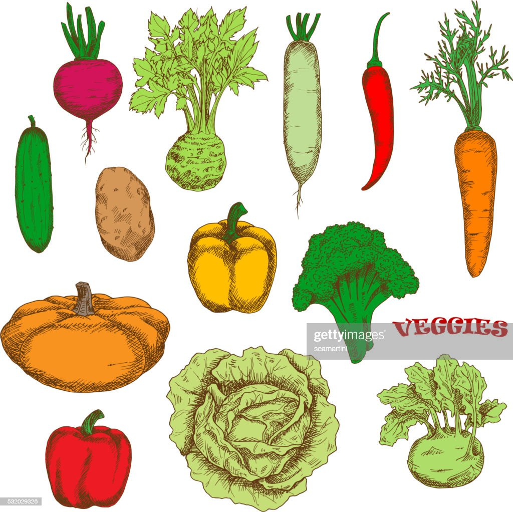 Colorful organically grown fresh vegetables sketch