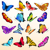 Colorful realistic butterflies big vector set