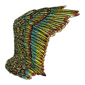 Colorful single eagle bird or angel wing. Colourful etched woodcut vintage style wing. African, Indian totem tattoo design concept for body art. Vector.