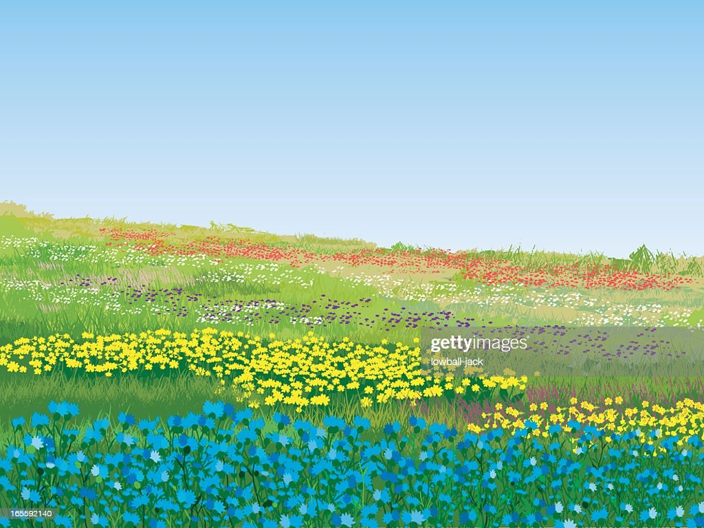 A colorful summer meadow on a nice day
