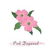 Colorful watercolor texture vector botanic garden flower pink dogwood Cornus florida