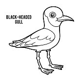 Coloring book, Black-headed gull