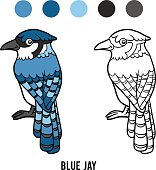 Coloring book, Blue jay