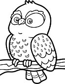 Coloring book for children, little owl
