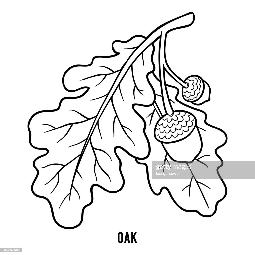Coloring book for children, Oak branch