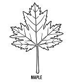 Coloring book, Maple leaf