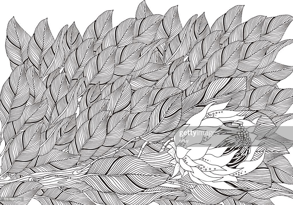 Coloring Book Page For Adult And Children Protea Flower Art Vector