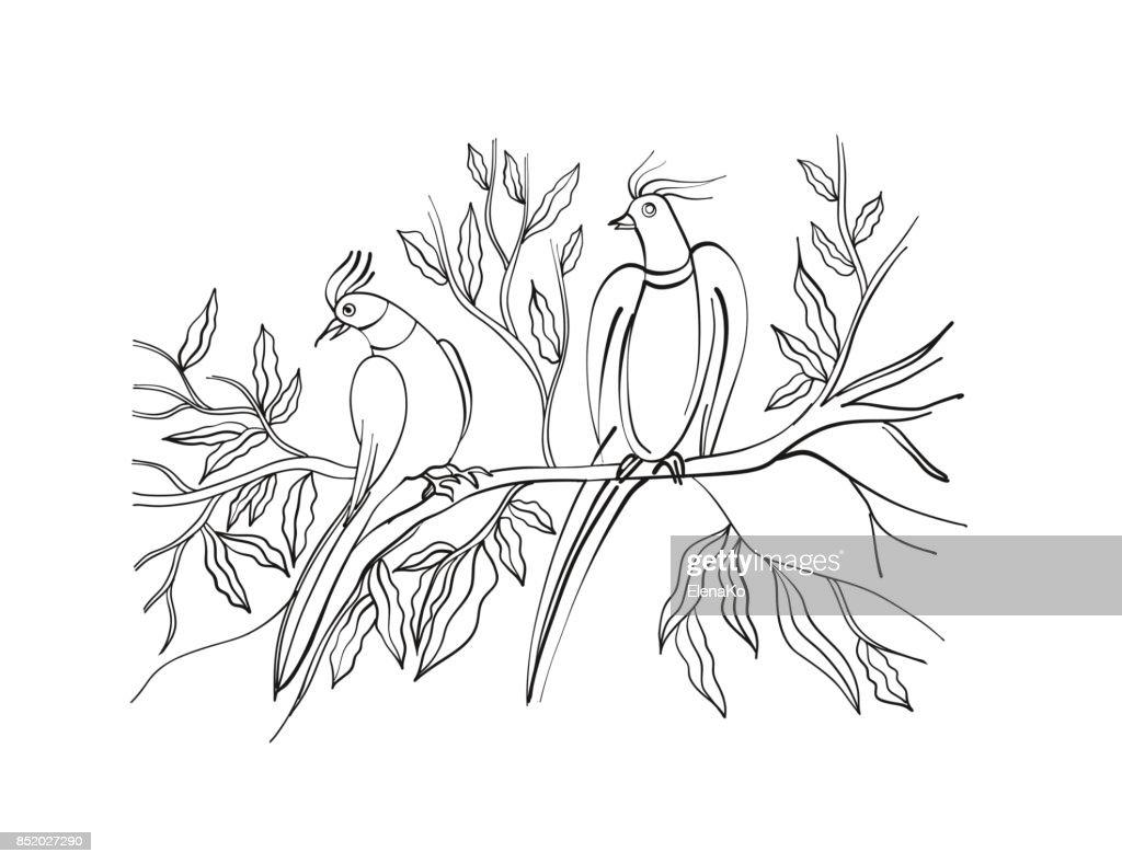 Livre De Coloriage Dessinés à La Main Oiseaux Exotiques