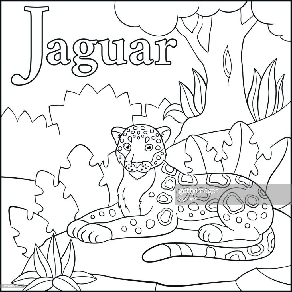 Malvorlagen Cartoon Tiere Alphabet J Steht Für Jaguar Stock