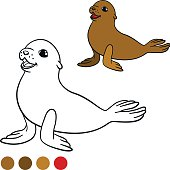 Coloring page with colors. Brown little cute baby fur seal.