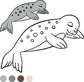 Coloring page with colors. Little cute spotted baby seal.