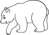 Coloring pages. Little cute baby polar bear.
