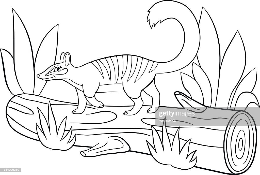 Superior Coloring Pages. Little Cute Numbat Walks On The Log. : Vector Art