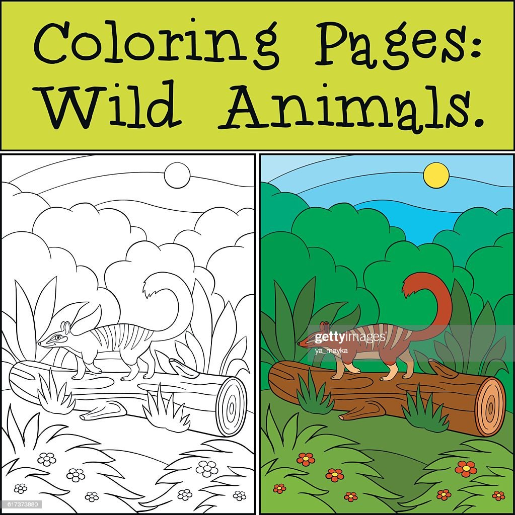 Coloring Pages: Wild Animals. Little Cute Numbat On The Log. : Vector Art