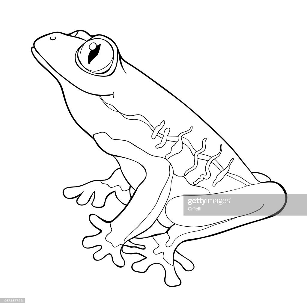 coloring woody frog is red-eyed. vector illustration