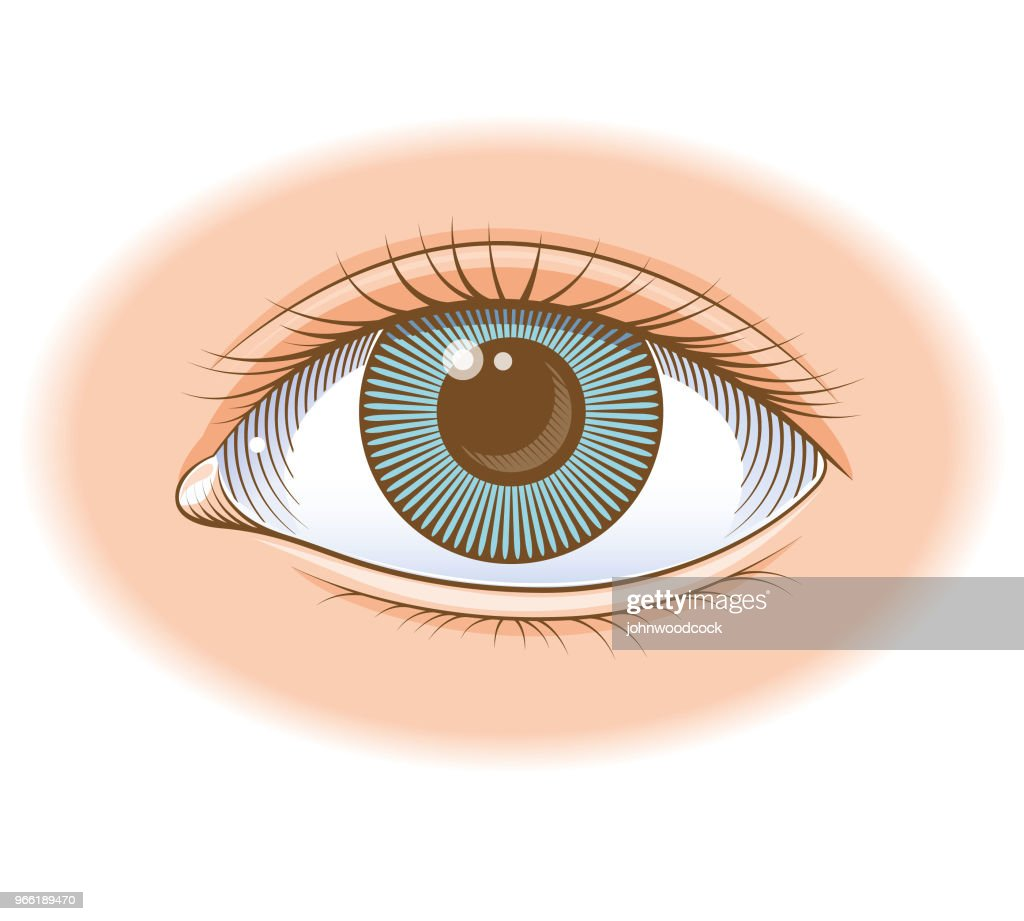 Coloured eye illustration : stock illustration