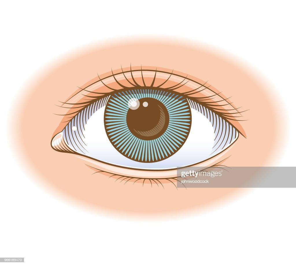 Ilustração de olho colorido : Ilustração