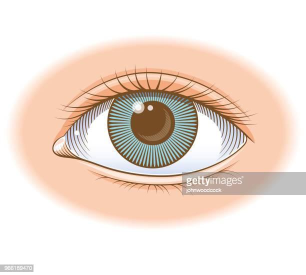 Coloured eye illustration