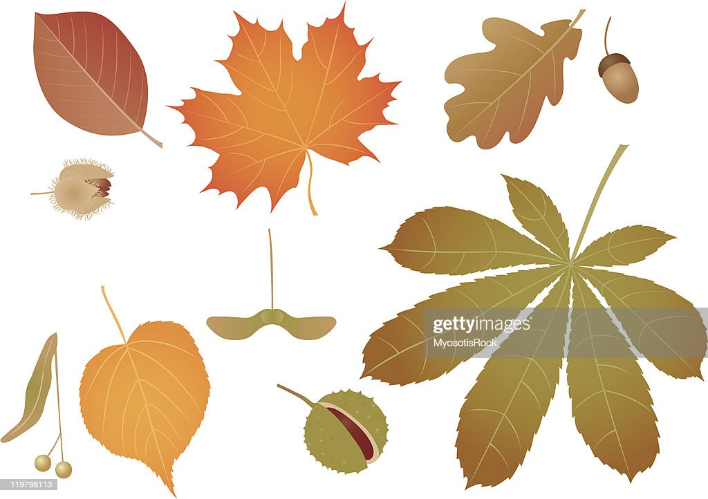Coloured leaves