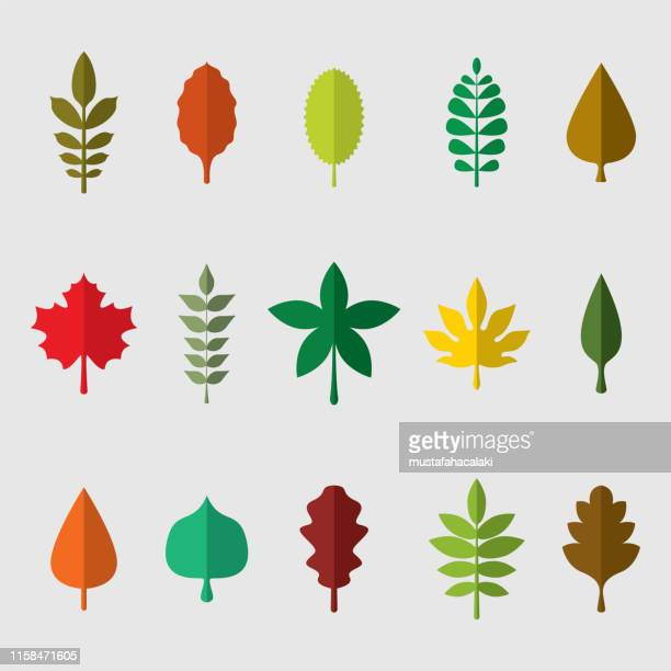 Colourful leaves vector illustration set