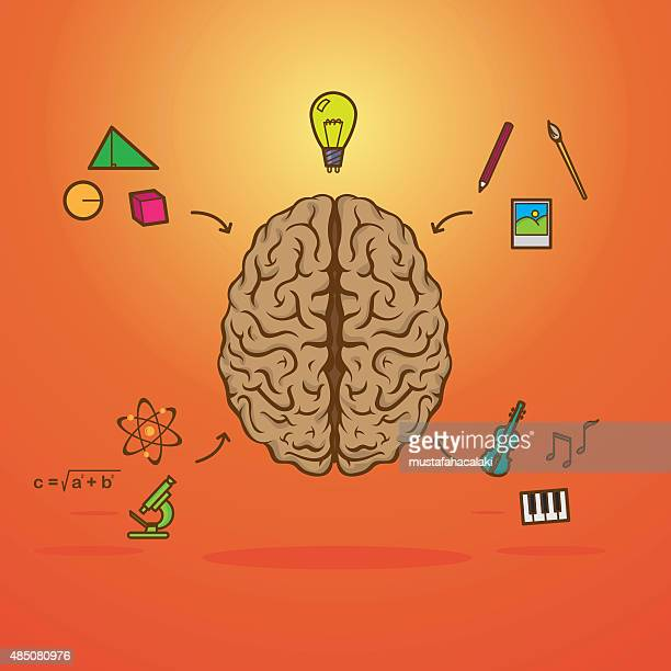 colourful left and right brain - cerebral hemisphere stock illustrations, clip art, cartoons, & icons