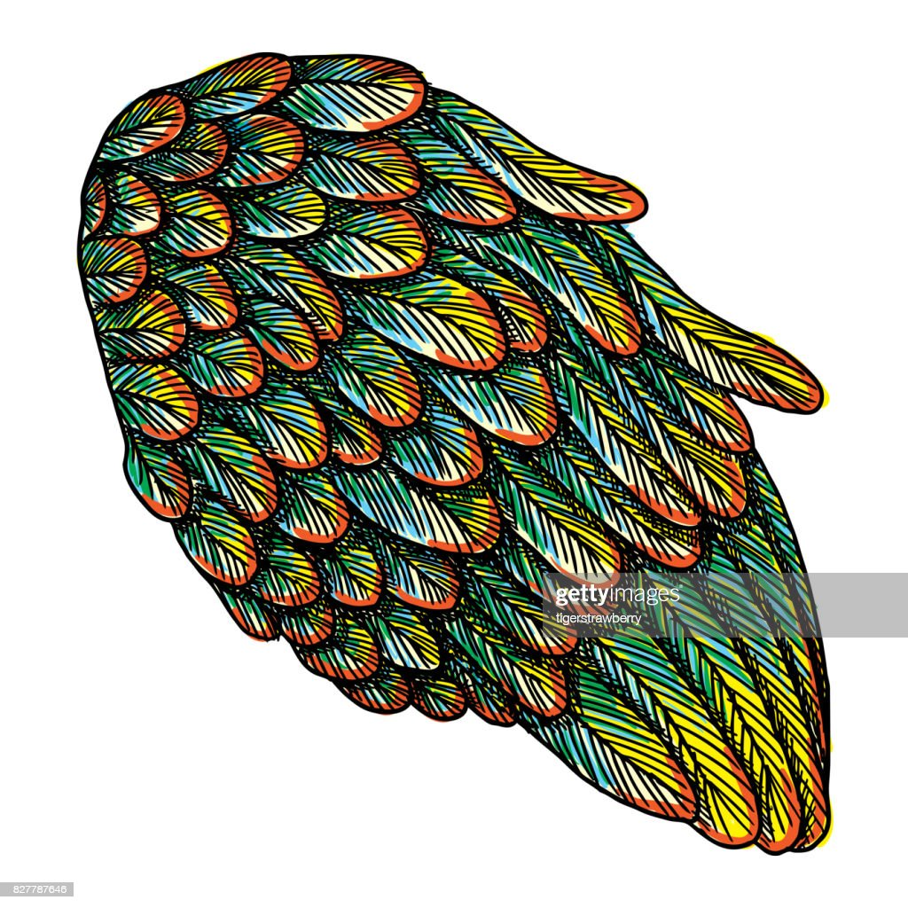 Colourful wing. Hand drawn detailed colorful wing. Vintage tattoo isolated on white background. Design elements for body art concept. Vector.