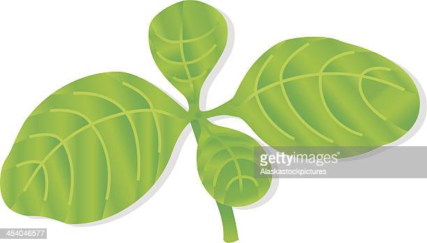 common basil leafs (herb). - basil stock illustrations, clip art, cartoons, & icons