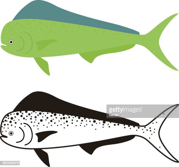 common dolphinfish, dorado fish, vector illustration - dolphin fish stock illustrations