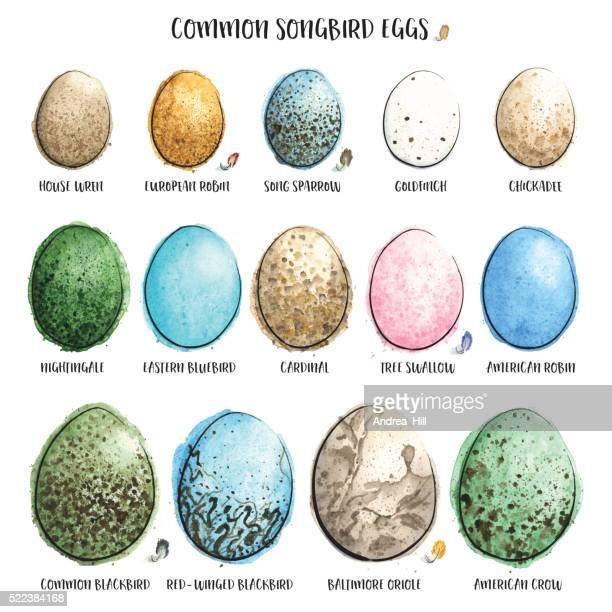 Common Songbird Eggs Painted in Watercolor. Vector Illustration.