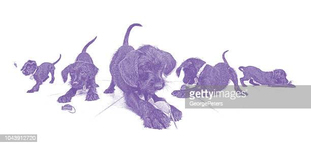 composite illustration of a cute puppy playing with toy. miniature schnauzer. - dog toys stock illustrations