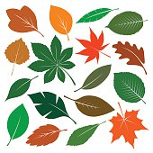 Composition of Color Leafs. Vector Illustration.