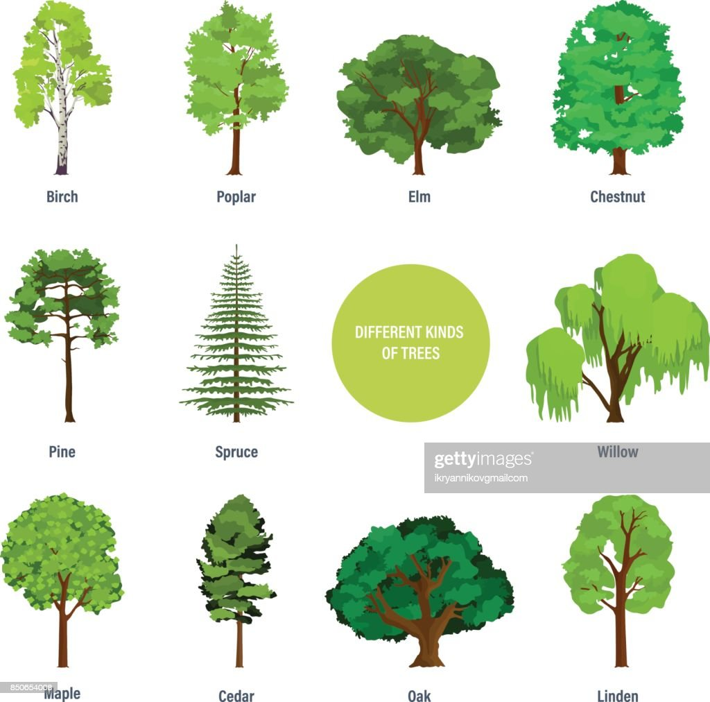 Concept of collection of modern different kinds of trees