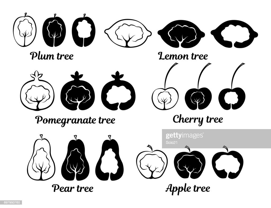 Conceptual fruit tree icons