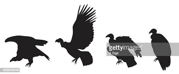 condors on the verge of extinction - scavenging stock illustrations
