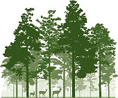 Conifer forest and deer family