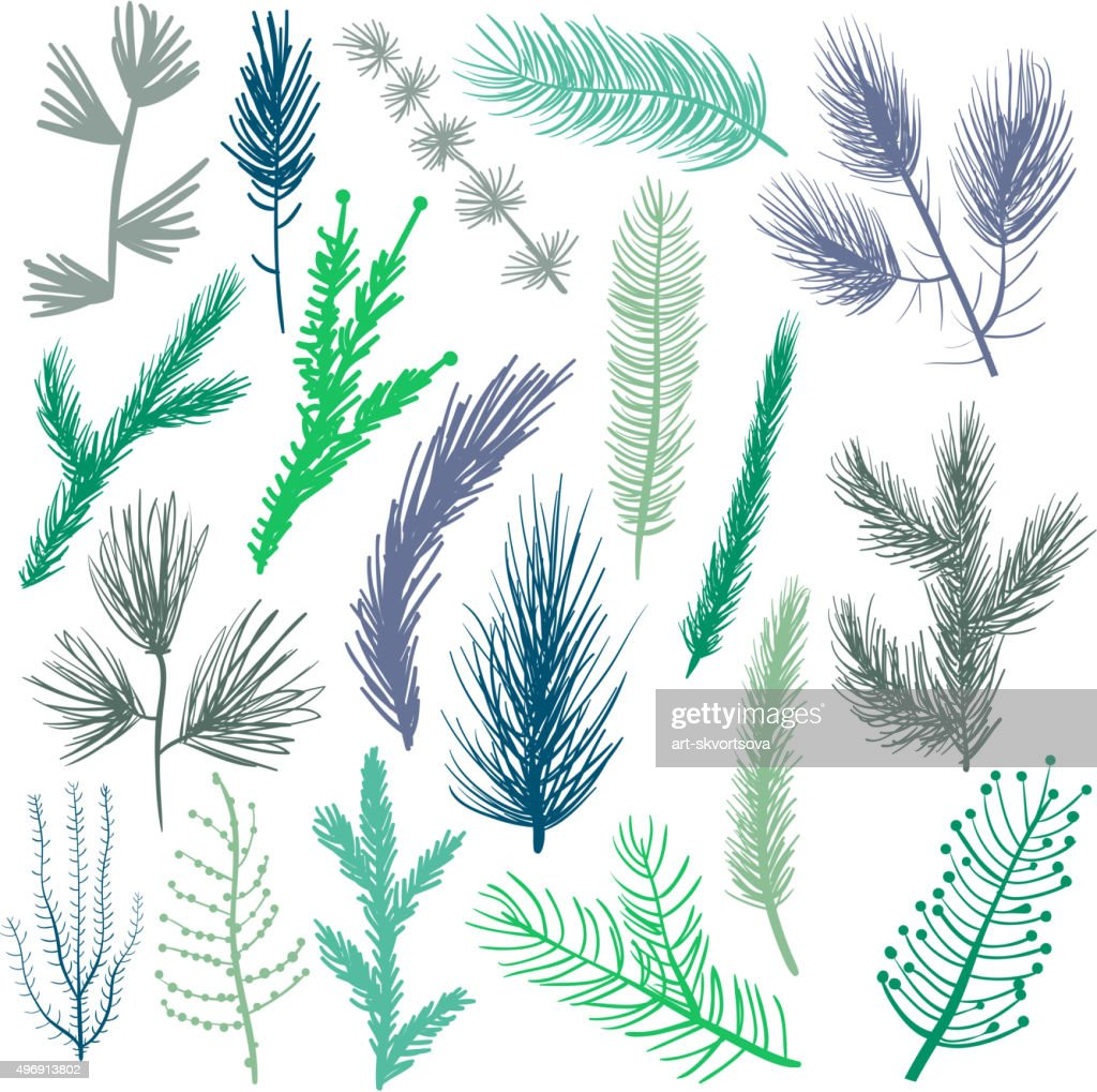 Coniferous tree branches set
