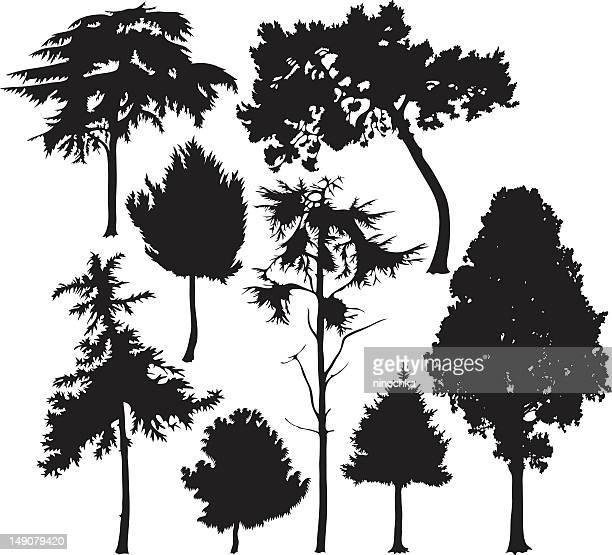 coniferous árboles