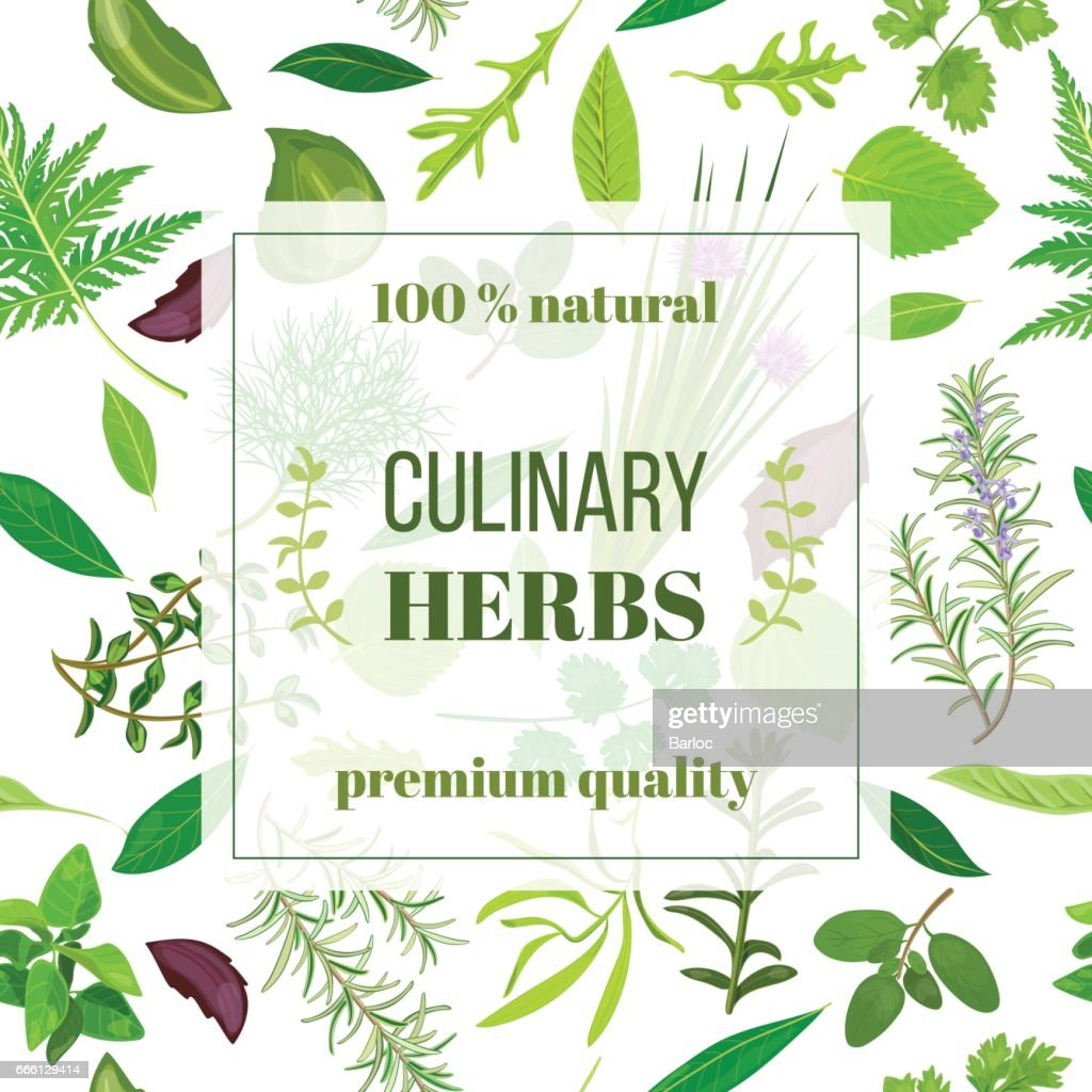 Cooking herbs seamless pattern vector set