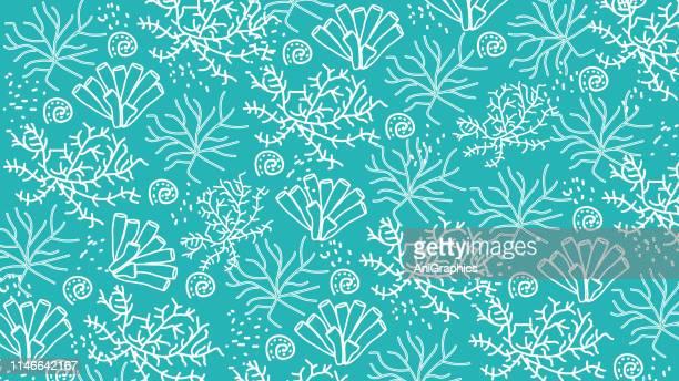 ilustraciones, imágenes clip art, dibujos animados e iconos de stock de fondo de coral - concha de mar