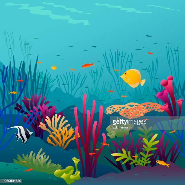 coral fish - undersea stock illustrations