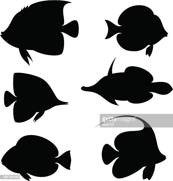 coral fishes - angelfish stock illustrations, clip art, cartoons, & icons