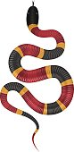 Coral snake vector illustration isolated