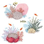 Corals and Swimming Fishes